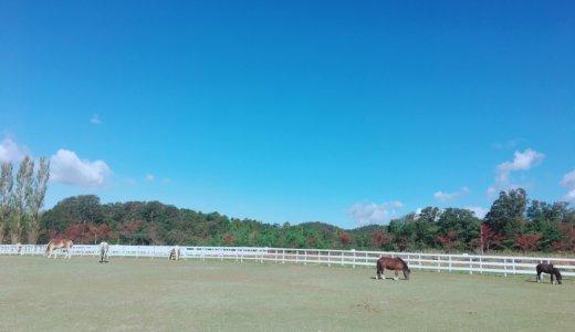 滋賀のブルーメの丘|子連れで1日遊べた!動物ふれあいで情緒を育むおすすめ観光地