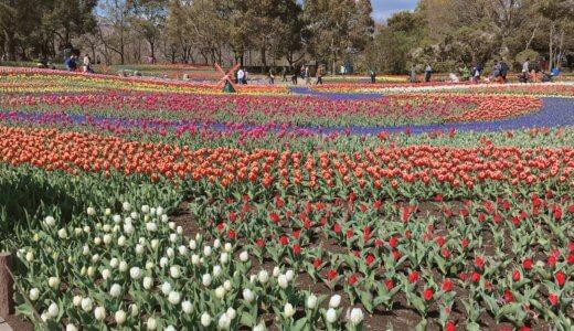 【2019】木曾三川公園のチューリップ祭に行ってきた!混雑・渋滞情報や、咲き具合をレポートするよ♪