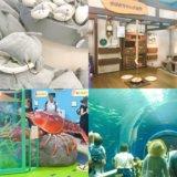 『琵琶湖博物館』に行って分かった見どころ5つ!子連れ情報多めに写真レビュー(滋賀県)